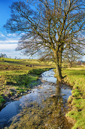 A view of a bare tree standing beside a small stream on a sunny day in the English countryside.