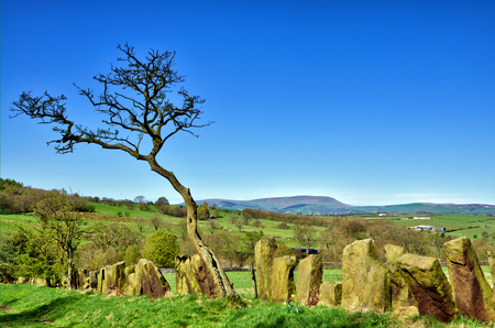 An unusual stone built boundary fence and lone tree near Pendle Hill, Lancashire, Northern England.