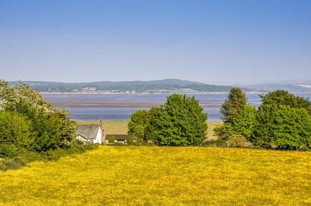 A field of Spring Buttercups in Grange-over Sands, with  Morecambe Bay in the background and a white house. Stock Photo