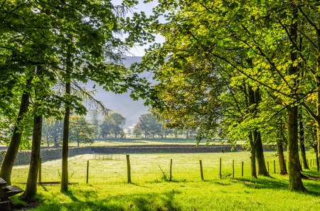 langdale: Trees and fields in Northern ngland backlit by the early Autumn sun. Stock Photo