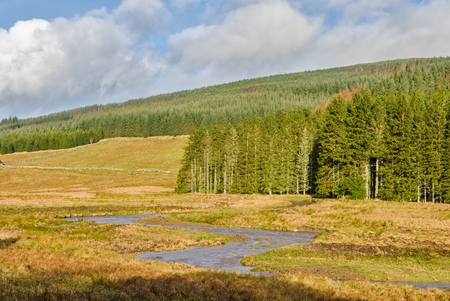 bordered: Stream in Kielder Forest, Northumberland, England,  meandering through the landscape bordered by the largest man-made woodland in Europe. Stock Photo
