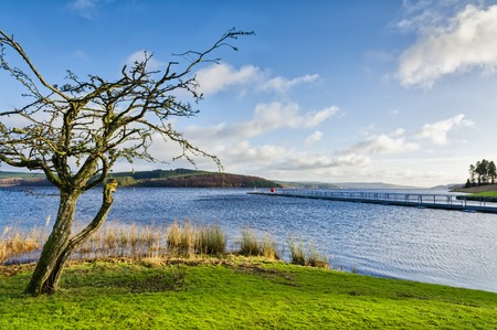 piped: Bare tree in the sunny landscape beside Keilder artificial Reservoir in Northumberland, North East England.