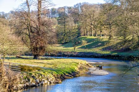 Paisaje rural de Kent River en Levens Park en Cumbria, Inglaterra el día soleado con los árboles desnudos.