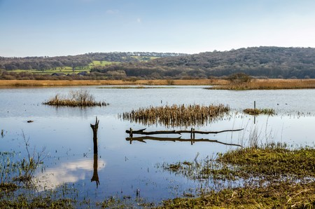 Bird reserve of Leighton Moss RSPB in Lancashire, England on sunny day.
