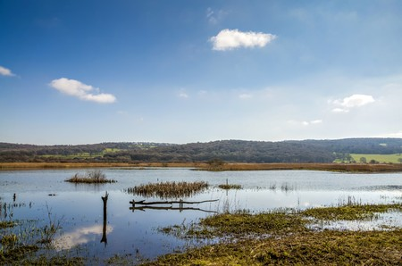 lancashire: Marshland at Leighton Moss RSPB bird preserve in Lancashire, England on sunny day.