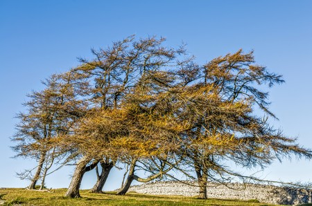 Wind blown trees in green field against sunny blue skies. Stock Photo