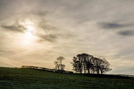 Silhouette of trees and hedge in green field against cloudy skies at sunset.