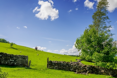 A gap in a dry stone wall with a windswept tree. Stock Photo