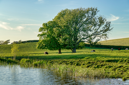 A peaceful English rural scene by the Lancaster canal