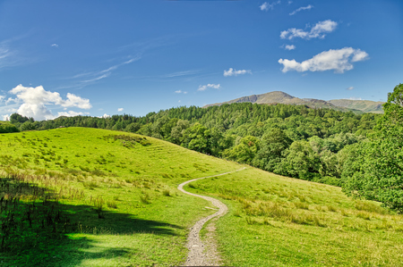 A winding track leading through a grassy meadow in the English lake District. 免版税图像