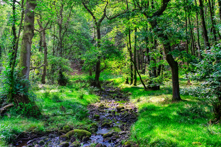 A small stream flowing through an English forest in Summer.