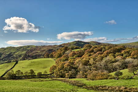 A rural English scene with Autumn trees and grren fields.