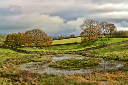 An English Autumn scene with a group of trees by a tarn or pond.