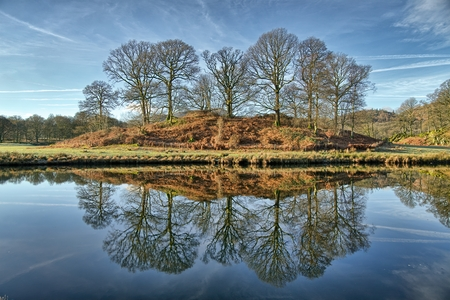 Reflections of a copse of trees in Elterwater. 免版税图像