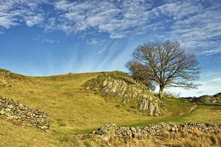 A rocky knoll and lone tree in little Langdale.