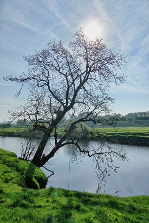 A silhouette of a lone tree on the bank of a river