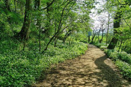 A path through an English woodland in Spring, with wild garlic growing alongside
