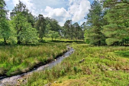 A small stream flowing through the scenic Forest of Bowland in Summer 免版税图像