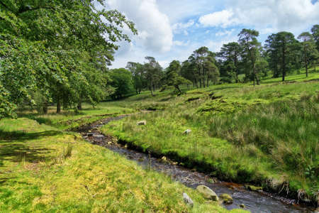 A small windingstream flowing through the scenic Forest of Bowland in Summer 免版税图像