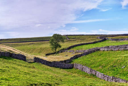 Dry stone walls and pasture in the Yorkshire Dales National Park.