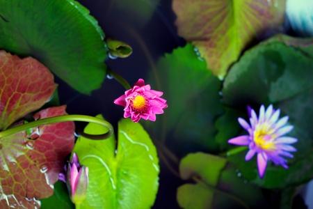 meant: Alcuni colori da una pianta che cresce in acqua S�, volevo dire piante acquatiche