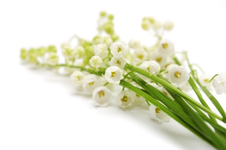 mayflower: Lily of the valley on a white background