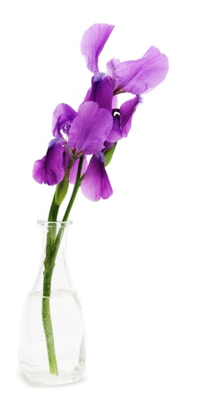 Iris flower in the vase isolated on white background photo