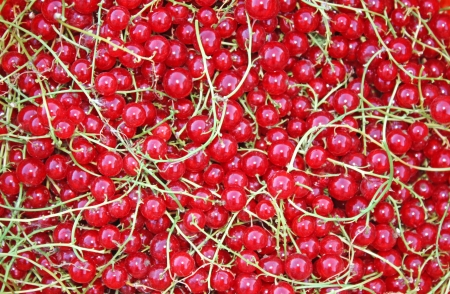 bacca: Background of redcurrant in closeup .