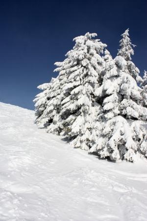 decembe: Winter in Carpathians. Mountain landscape .