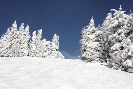 decembe: Snow-covered tree on a sky background .