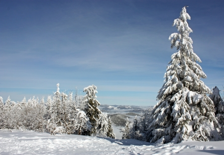 decembe: Snow-covered tree on a sky background