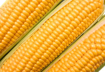 espiga de trigo: Espigas de trigo aislado en un fondo blanco.
