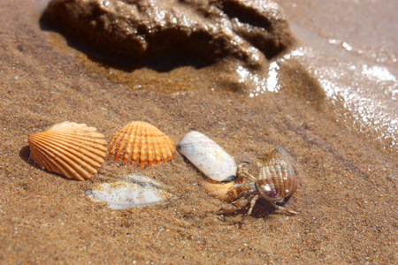 decapod: Three hermit crabs on the background of sand and shells Stock Photo