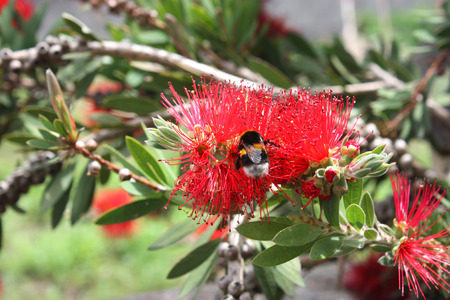 Tree with red flowers and bees on them