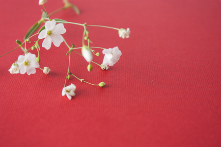 Shallow white flowers on a red background