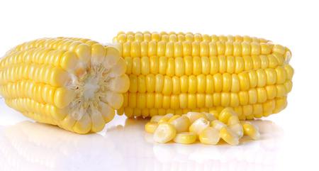 raw corn isolated on the white background. photo