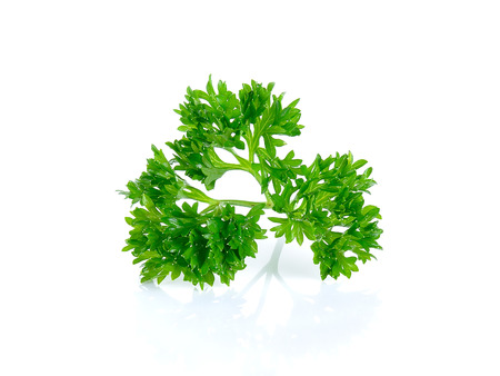parsley isolated on the white background.