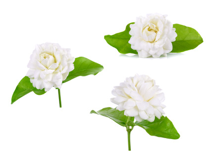 Jasmine flower isolated on white background.