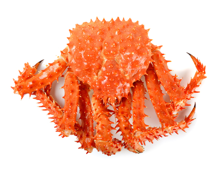 crab legs: Alaskan king carb in isolated white background.