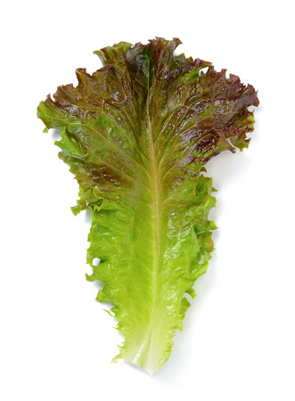 Lettuce leaf isolated on the white background.