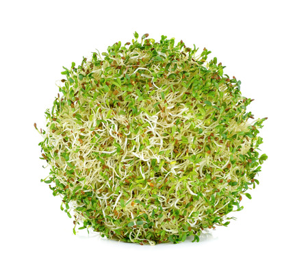 alfalfa sprouts isolated on the white background. 스톡 콘텐츠