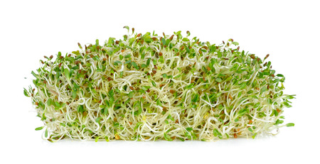 alfalfa sprouts isolated on the white background.