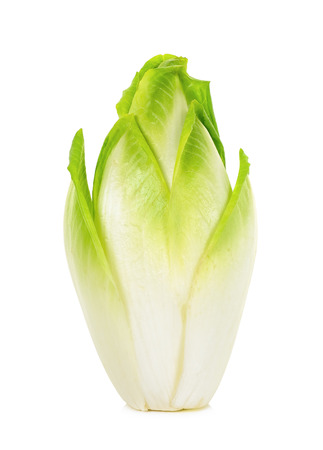 fresh chicory isolated on a white background.