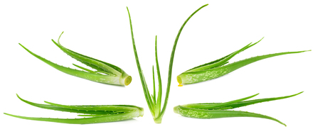 Set of Aloe vera plant isolated on the white background.