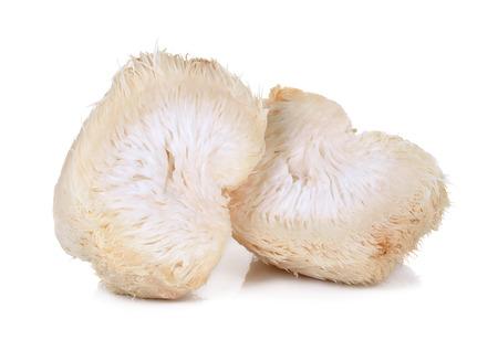 Lion mane mushroom isolated on white background. Banco de Imagens