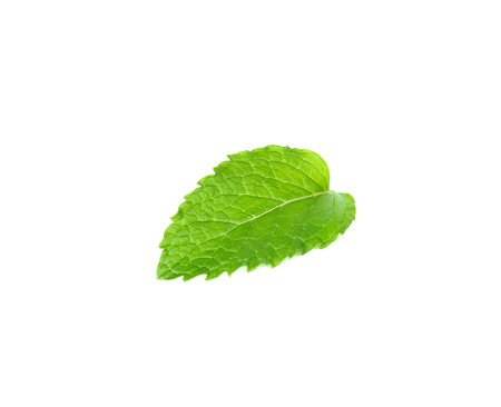 mint leaf isolated on the white background.
