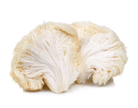 lion mane mushroom isolated on white background. Stok Fotoğraf