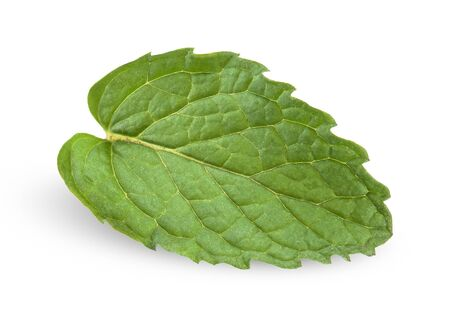 pepper mint isolated on white, mint Stock Photo