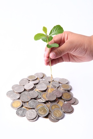 baht: hand and tree above coint isolated Stock Photo