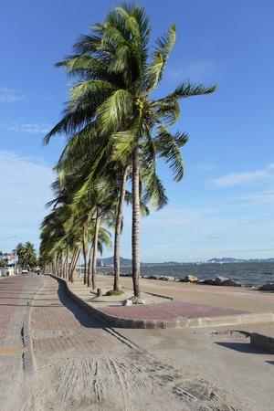 classifier: coconut tree besede beach Stock Photo